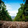 Pasetti Vineyards
