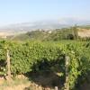 Region of Abruzzo