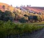 Vines_turning_Red_for_Fall_170_128