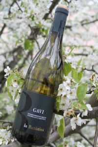 MAY --smaller- GAVI PICS 024